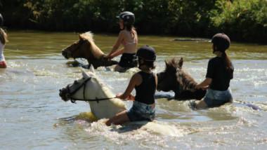 Stages d'équitation été 2018 : Renseignements et inscriptions